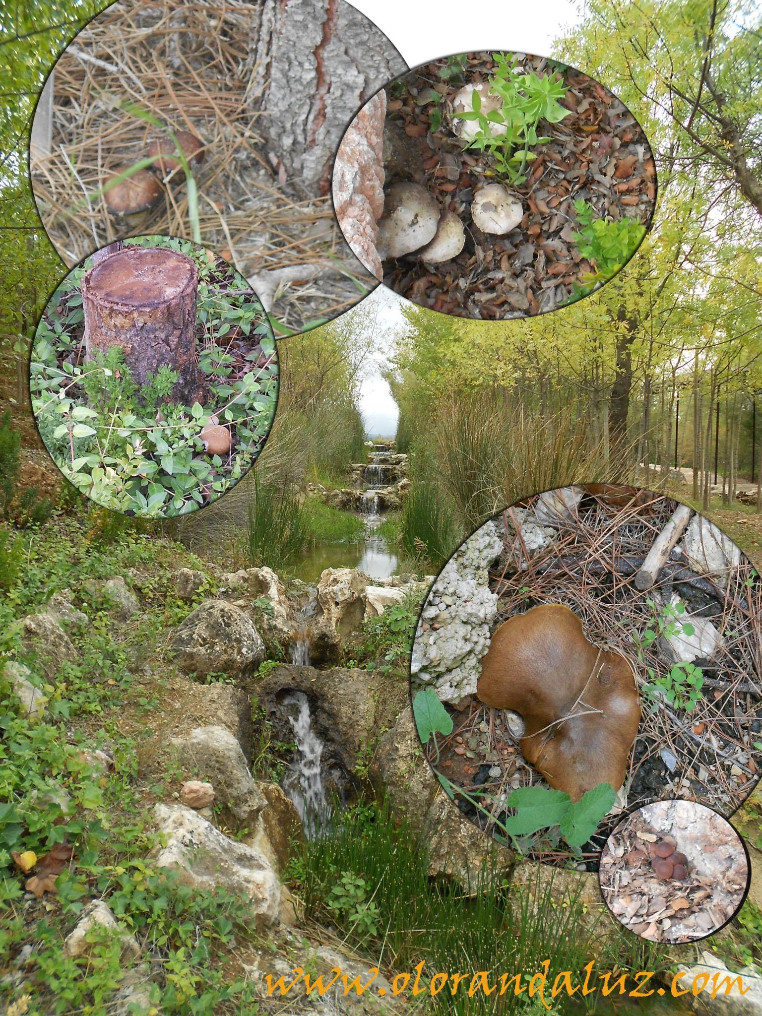 Jardin micologico la trufa olor andaluz for Jardin micologico la trufa